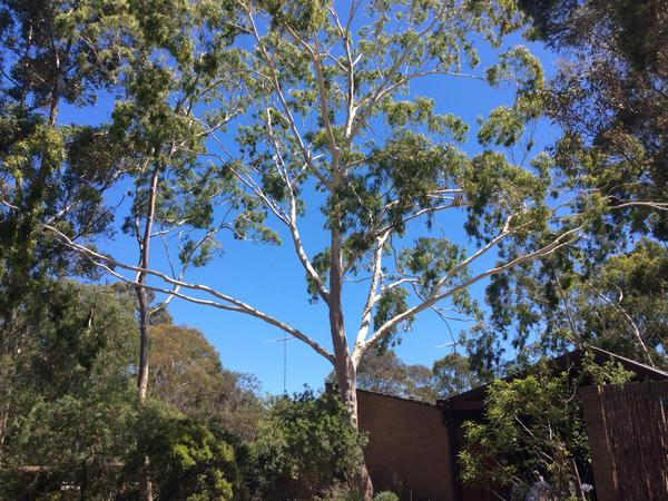 Housesitting assignment in Rosanna, Victoria, Australia