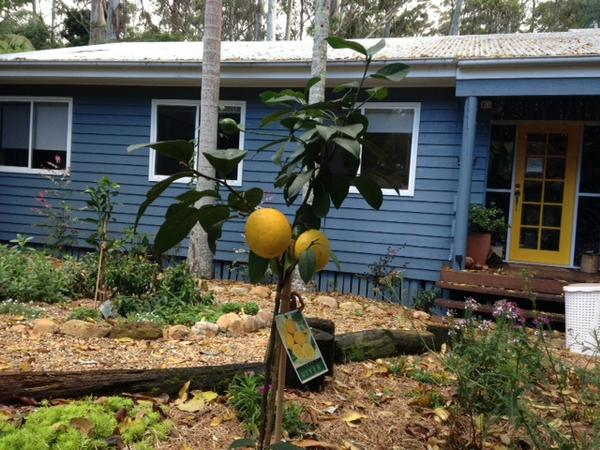 Housesitting assignment in Gold Coast, QLD, Australia