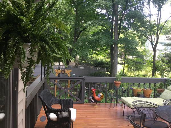 Housesitting assignment in South Bend, Indiana, United States