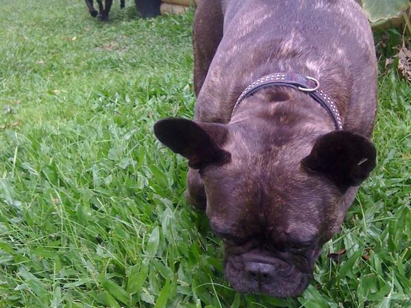 Pet sitter for 2 dogs and cat