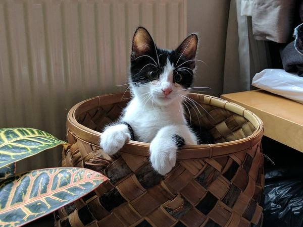 Cat sitter needed for our 8 months old kitten Archie