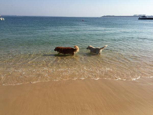 Housesitting assignment in Coogee, New South Wales, Australia