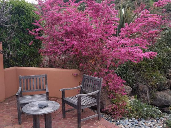 Housesitting assignment in El Dorado Hills, CA, United States