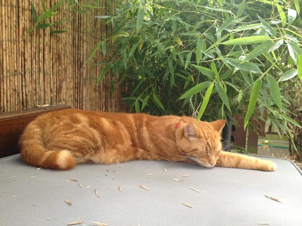 Pet/House sitter needed for our cat Bruce for 2 weeks in London