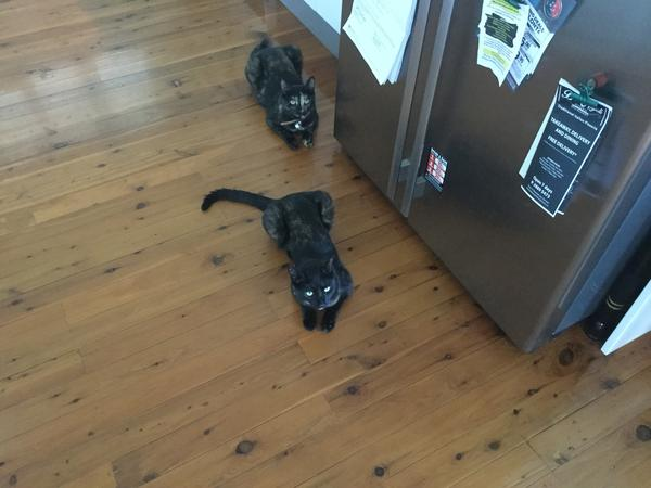 Housesitting assignment in Woody Point, Queensland, Australia