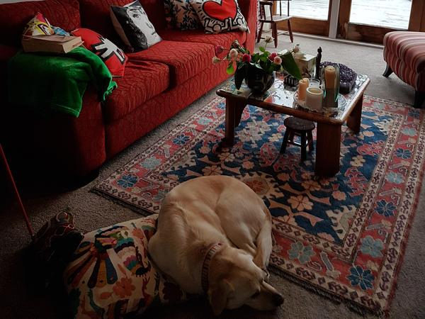 Housesitting assignment in Paraparaumu, New Zealand