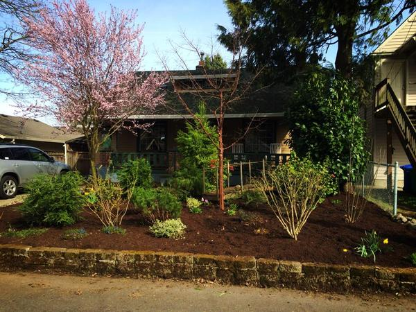 Housesit in a classic Portland Bungalow with adorable kitties to keep you company!