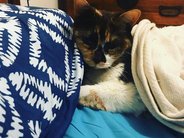 Cat-friendly housesitter required in Brunswick late Sept/Oct