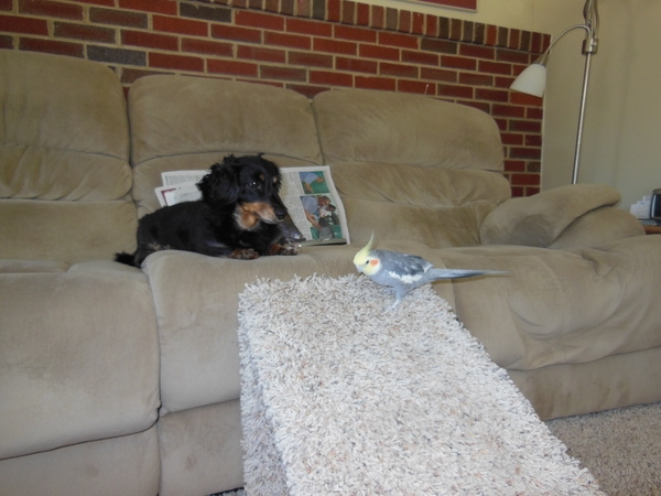 House/bird sitter required for a home in Glen Burnie, Maryland