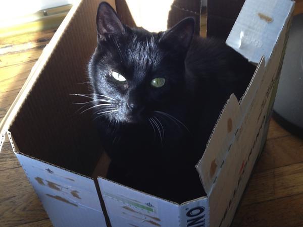 Sweet Pea La Rue needs a cat/apartment sitter