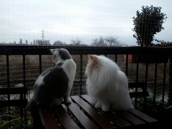 X Cat lovers required to sit 2 beautiful indoor Persian cats