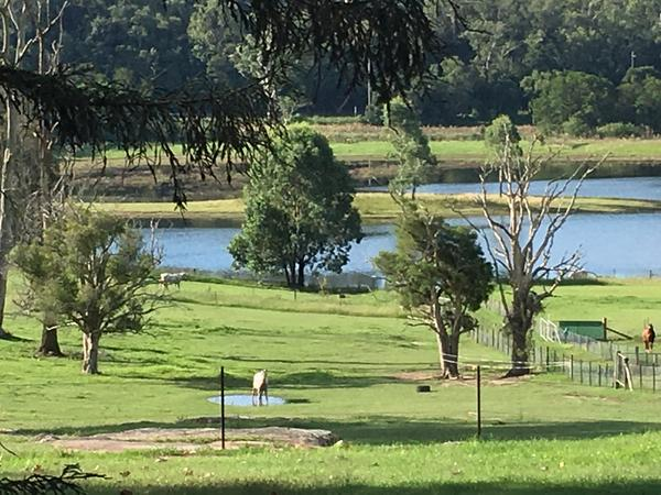 Housesitting assignment in Cattai, New South Wales, Australia