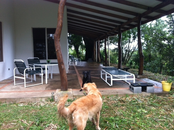 House and Petsitter sought in Guanacaste