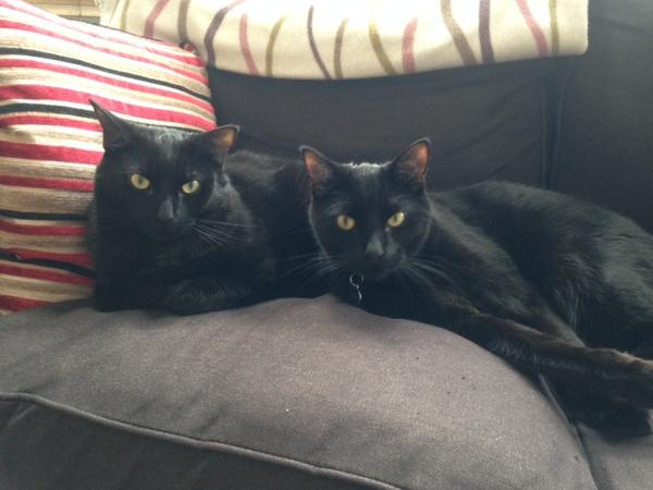 Looking for a house/catsitter for 2 lovely (mostly indoor) cats in Hove over Xmas/NY