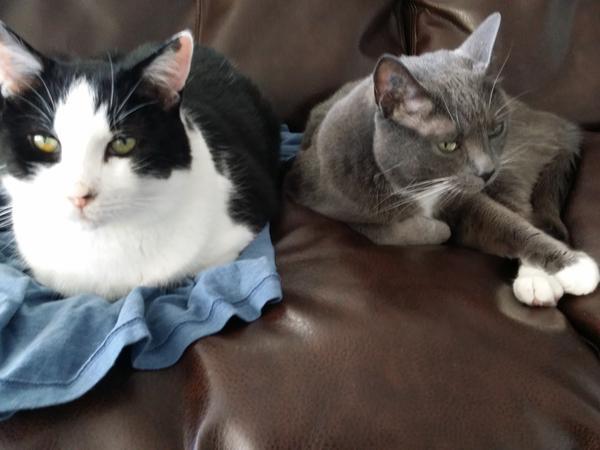 Lakeside Toronto Condo over Xmas w/ two lovely cats