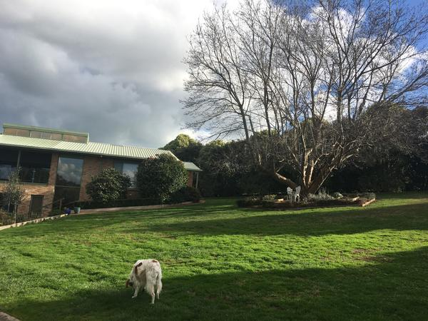 Housesitting assignment in Drouin, Victoria, Australia