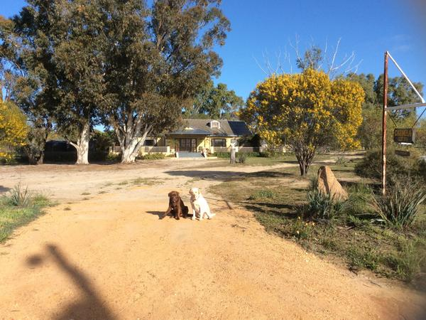 Housesitting assignment in Korrelocking, Western Australia, Australia