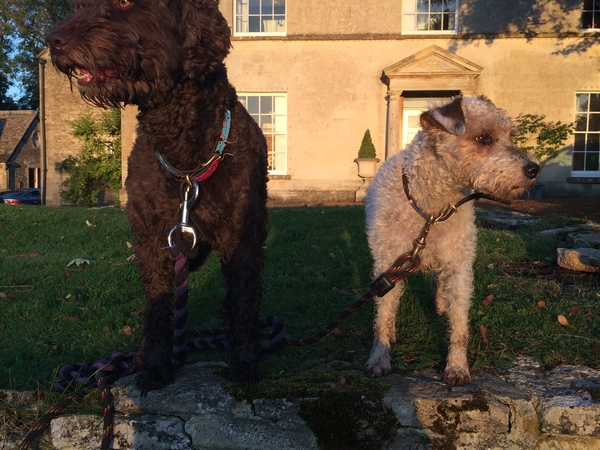 House Sitting in Gloucestershire for Labradoodle and Jack Russell - July/August 2017