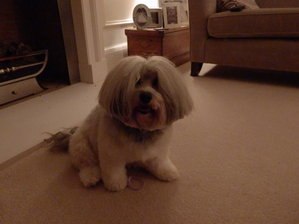 We need house sitters for approx 1 week in early March for our4 year old Havanese and 2 friendly cats.