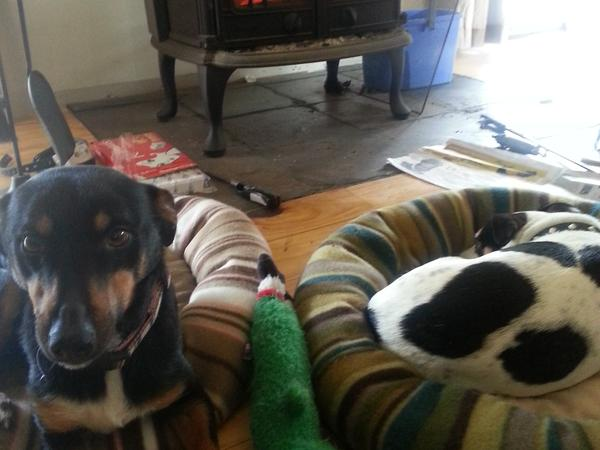 House, pet and land sitter required for 12 days in November