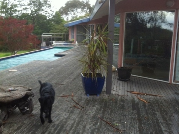 Housesitting assignment in Ringwood North, VIC, Australia