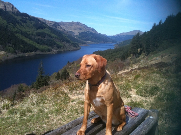 Pet and house sitter required to look after our Labrador Mac. Enjoy our spectacular views and enjoy walks in our lovely Argyll Forest Park.