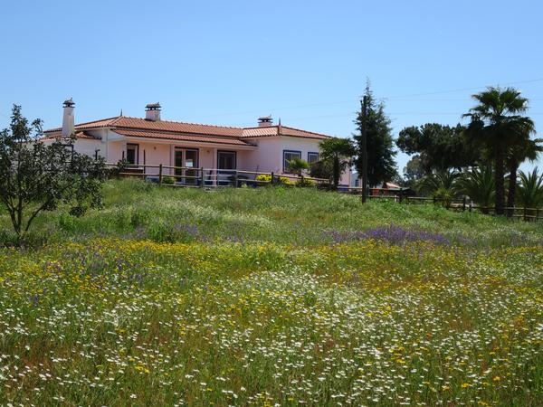 Housesitting assignment in Vendas Novas, Portugal