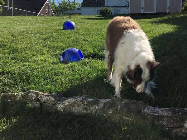Housesitting assignment in Weirton, West Virginia, United States