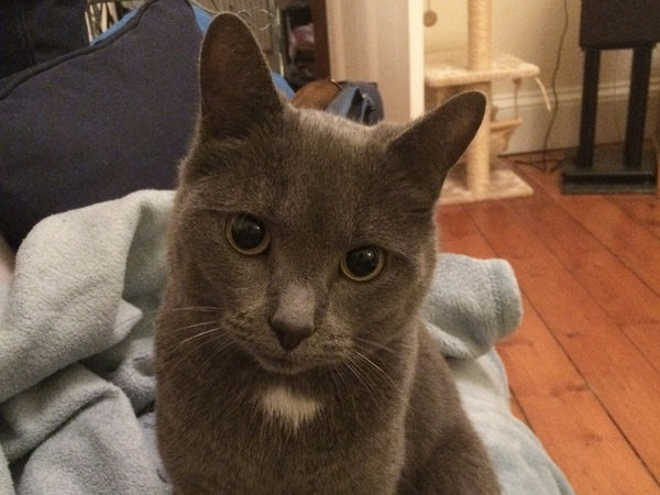 Cat Sitter needed in Edinburgh