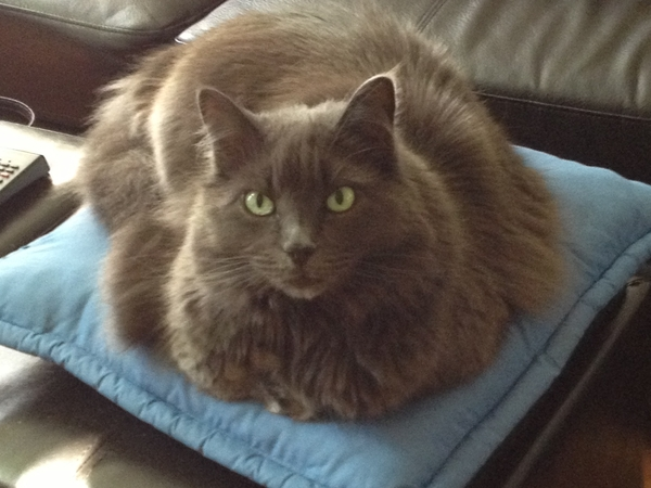 House & kitty sitter needed for our 2 cats in NorCal Suburbs (Orangevale - very close to Old Town Folsom)