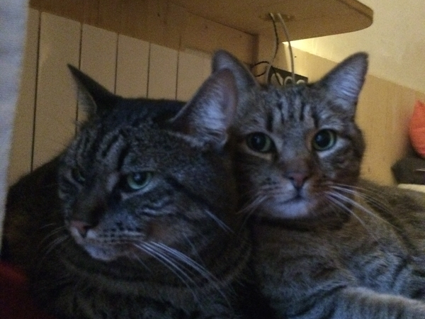 cat sitter needed for Ben and Tang from MARCH 28 UNTIL APRIL 2 ND AND FROM april 15 th until april 23 rd