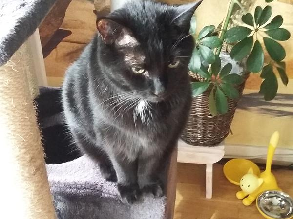 Cat sitter for lovely black rescue cat in Camden Town needed