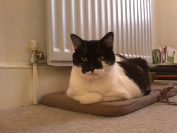 Cat sitter needed for 2 weeks in London