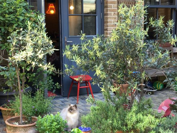 Cat sitter required in the heart of Shoreditch London