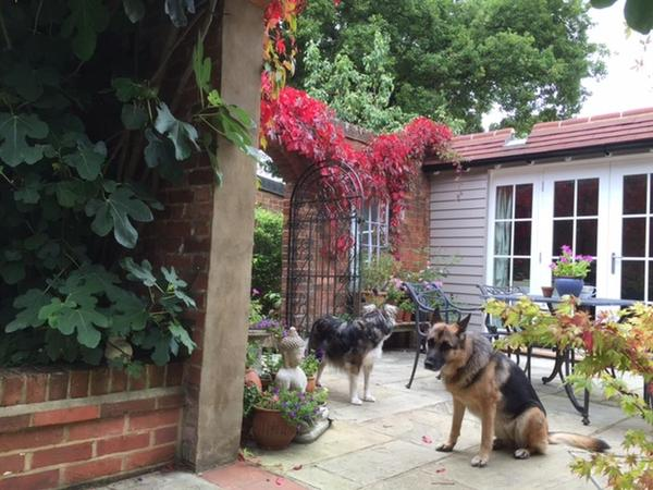 Pet Sitter needed for our animal family in Outwood Surrey