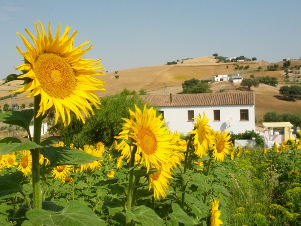 Pet sitter needed for 2 cats and a dog near Ronda, Spain