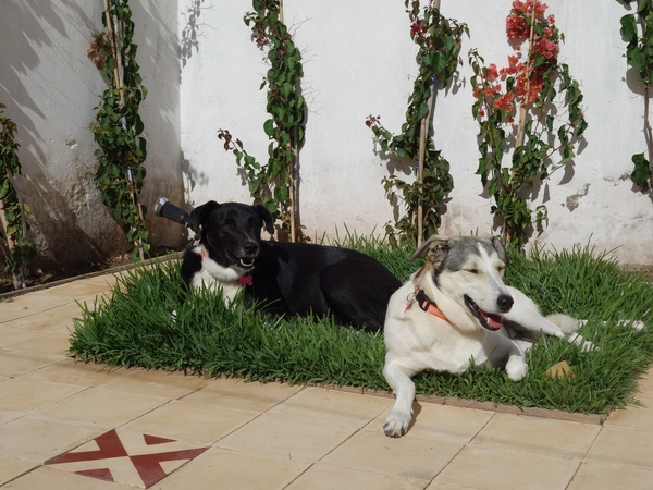 Housesitting assignment in Essaouira, Morocco
