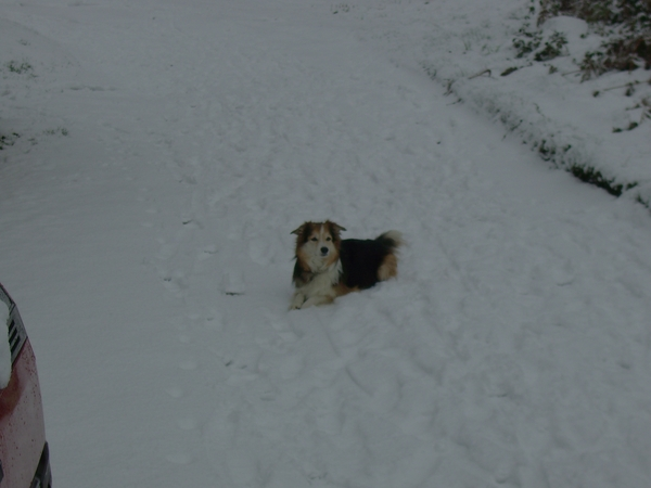 Pet sitter for our elderly (15yrs+) collie-cross dog Sam for 3 days at Easter in Byfield, Northants.