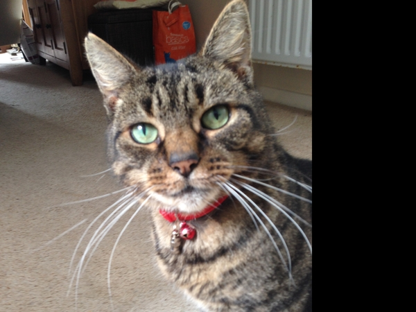 House and cat sitter needed for Wilfred in Brighton