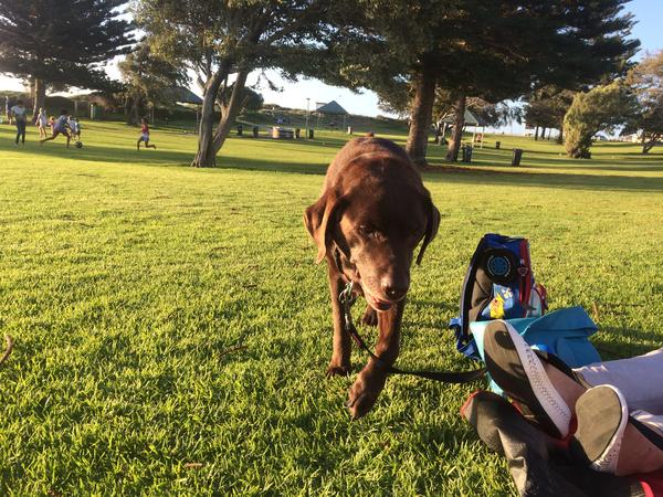 Housesitting assignment in Mount Eliza, Victoria, Australia