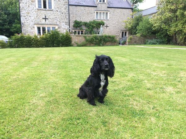 Experienced sitter for new puppy needed in our beautiful home near Lyme Regis