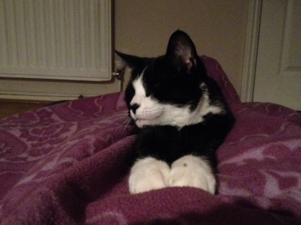 Very friendly kitty needs company. 15 minutes walk from Colliers Wood, London