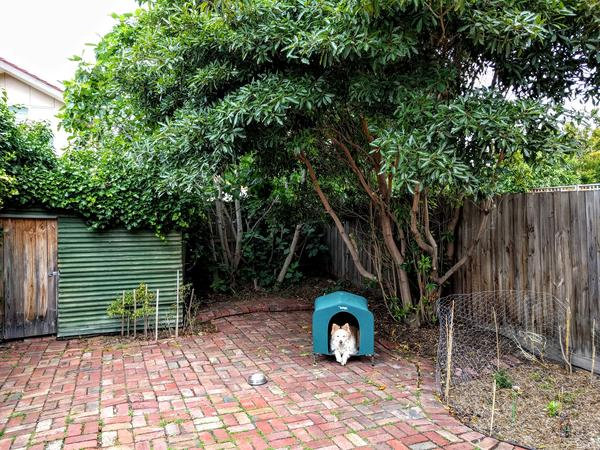 Housesitting assignment in Richmond, Victoria, Australia
