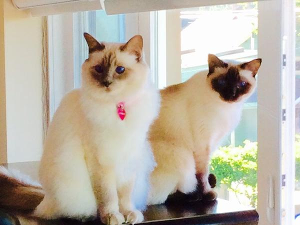 Pet sitter needed for our 2 cats