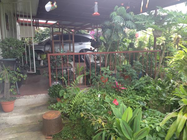 Housesitting assignment in Volcán, Panama