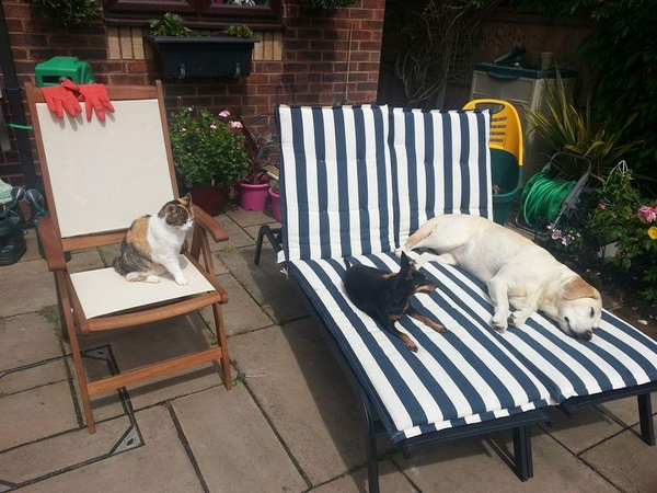 Pet sitter needed for Honey Pepsi and Elsa in North Warwickshire.