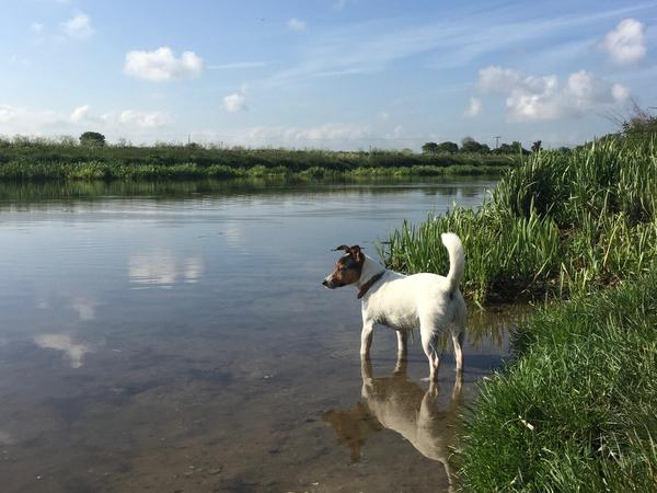 Housesitting assignment in Waterbeach, United Kingdom