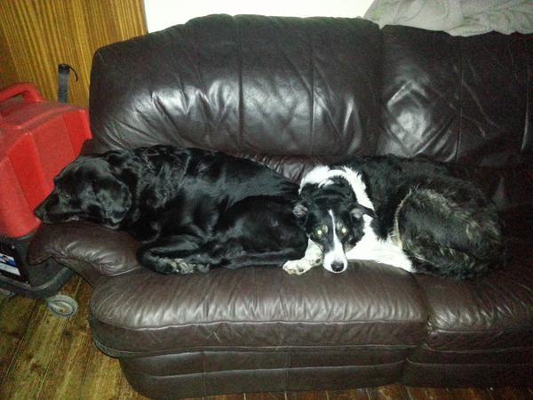 Pet/House sitter needed 2nd November for 16 nights Cheltenham, Gloucestershire