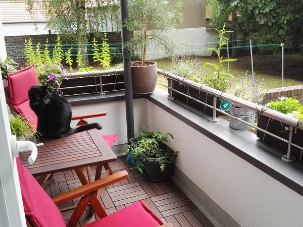 Housesitting assignment in Hannover, Germany