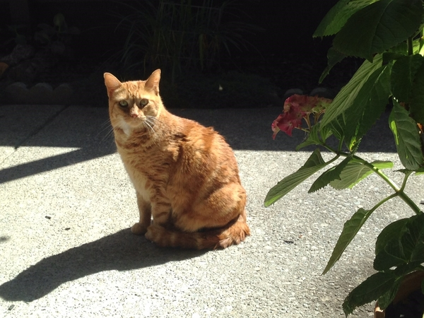 House/Pet Sitter needed for 30 Days in San Leandro, CA